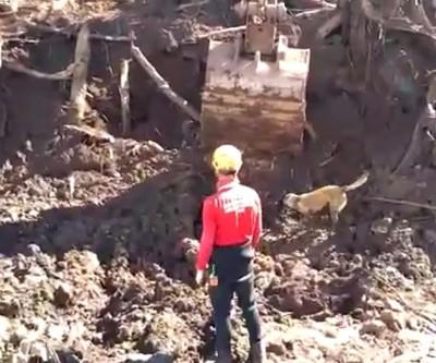 Brumadinho: bombeiros encontram almoxarifado da Vale onde pode ter corpos