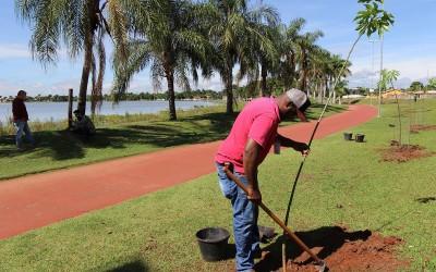 SEMEA realiza plantio de mais árvores em volta da pista de caminhada da Lagoa Maior