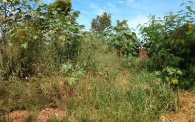 Terreno baldio traz transtornos aos moradores do bairro Carioca em Três Lagoas
