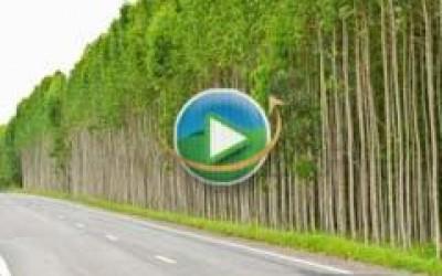 CNA debate cultivo de eucalipto em feira de Três Lagoas