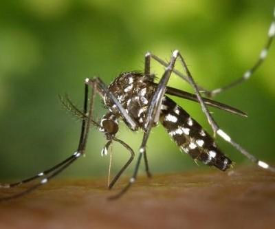 MS tem 18 mortes por dengue e epidemia atinge 70 cidades