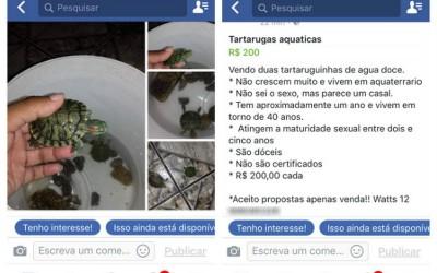 Facebook proíbe venda de animais vivos na rede social e no Instagram