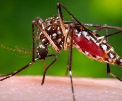 Saúde de Três Lagoas notifica 135 novos casos suspeitos de Dengue
