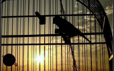 Homem é flagrado furtando gaiola de pássaro de estabelecimento no Centro de Três Lagoas
