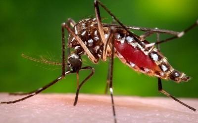 Divulgados os boletins de monitoramento semanal da Dengue, Leishmaniose e Gripe