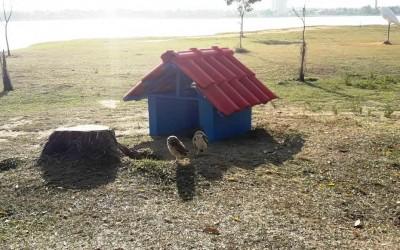 Para proteger ninhos e evitar acidentes, Meio Ambiente instala casinhas para corujas na Lagoa Maior