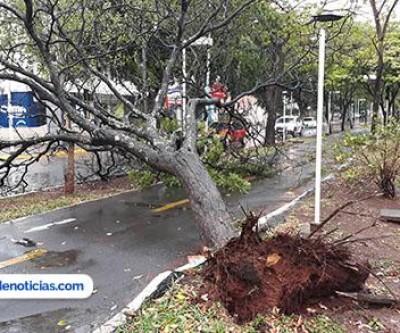 Em Ilha Solteira, chuva e vento derrubam árvores e deixam a cidade sem energia