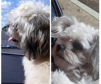 Internauta faz apelo para encontrar cachorro que desapareceu no bairro Vila Nova