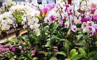 Exposição na Casa do Artesão terá orquídeas por R$ 15,00