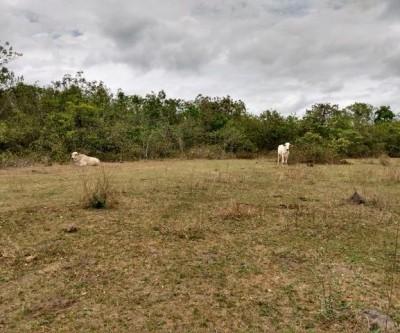 PMA de Três Lagoas autua pecuaristas em R$ 30 mil por manutenção de gado em área protegida por lei