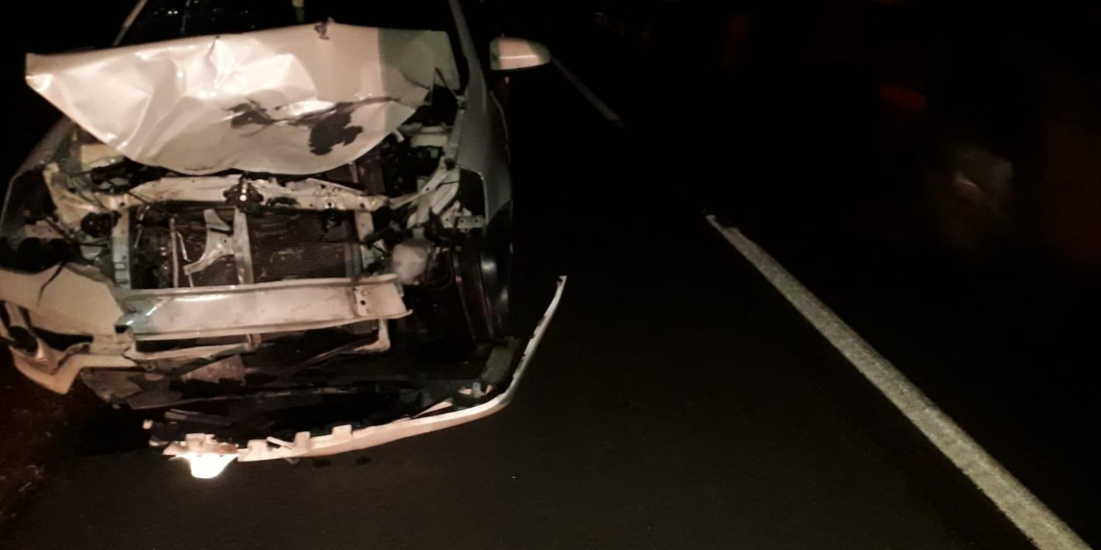 Anta tenta atravessar rodovia e causa acidente na BR-262, na região do Arapuá