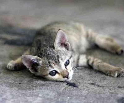 Moradora denuncia envenenamento de gatos no bairro Jardim Dourados