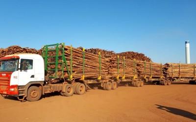 Suzano inova e cria modelo inédito de descarregamento de madeira em Mato Grosso do Sul