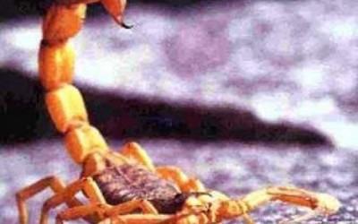 Criança de quatro anos que foi picada por escorpião continua internada