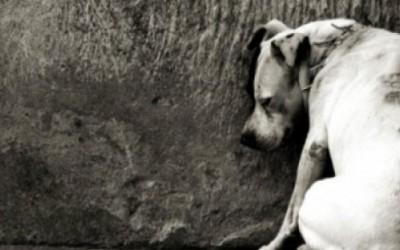 Pedradas e pauladas: cães são agredidos e deixados sem alimento