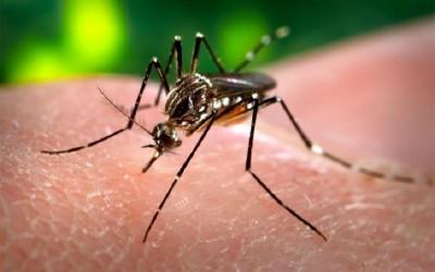 Número de casos notificados suspeitos para Dengue diminuem em Três Lagoas