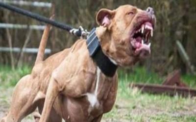 CCZ busca por cão que atacou criança na manhã desta quinta no Parque São Carlos