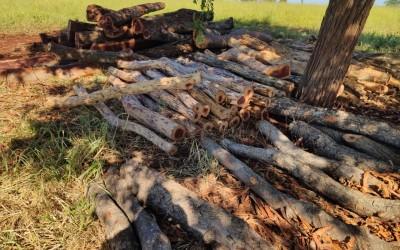 Idoso é autuado em R$ 13 mil por exploração ilegal de madeira pela PMA