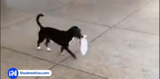 Em Ilha Solteira, cachorro faz sucesso nas redes ao buscar pão na padaria