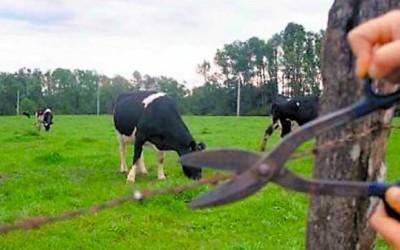 Pecuarista registra furto de gado em fazenda na região de Três Lagoas