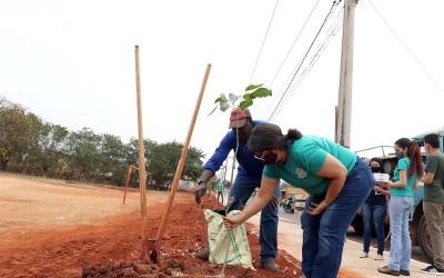 Meio Ambiente realizou plantio e distribuição de mudas em comemoração ao Dia da Árvore
