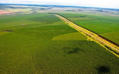 Suzano irá qualificar três novas turmas de operadores florestais em Três Lagoas, Brasilândia e Água Clara