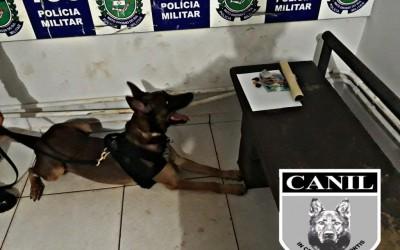 Canil do 2º Batalhão de Polícia Militar prende autor de tráfico de drogas e receptação