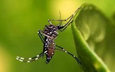 Boletim semanal aponta 02 novos casos de leishmaniose visceral e 06 casos suspeitos de dengue