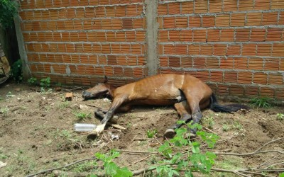 Internauta denuncia maus tratos contra cavalo que está prestes a morrer
