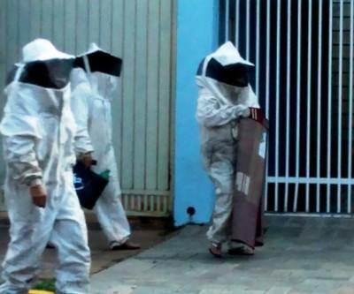Ataque de abelhas no Centro interdita rua e mobiliza os bombeiros