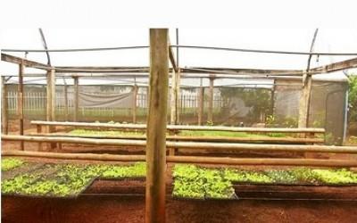 Escola de MS usa projeto de horta para ensinar português e matemática