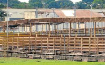 Com suspensão de abates, gado fica sem preço em Mato Grosso do Sul