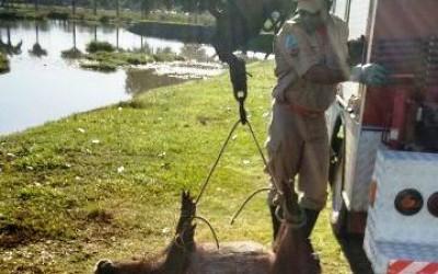 Capivara abatida com dois tiros na Lagoa Maior deixa autoridades em alerta