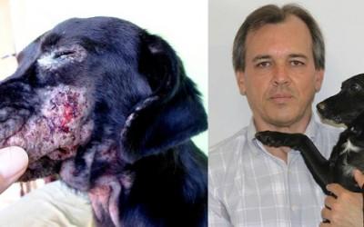 TRF proíbe eutanásia de cães na Capital e vereador quer extensão imediata da medida
