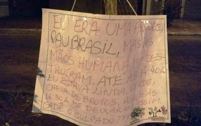"""""""Pau Brasil"""" vira caso de polícia; moradora coloca cartaz na árvore para tentar achar o culpado"""