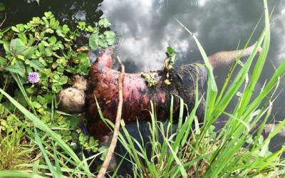 Corpo é encontrado boiando em rio no Jupiá
