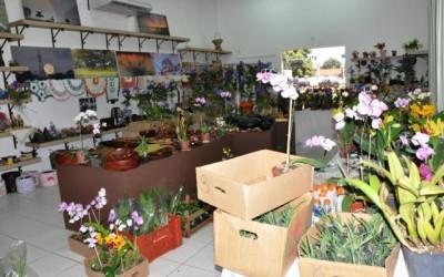 Exposição de Orquídeas vai até sábado na Casa do Artesão
