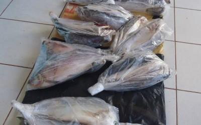 PMA de Três Lagoas apreende 52 Kilos de pescado