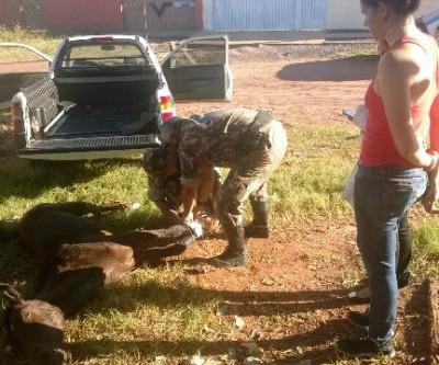 Égua é encontrada ferida e abandonada, mas prefeitura não tem veículo para o socorro
