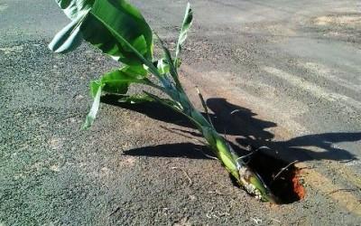 """""""Pé de Bananeira"""" é colocado em via para sinalizar perigo"""