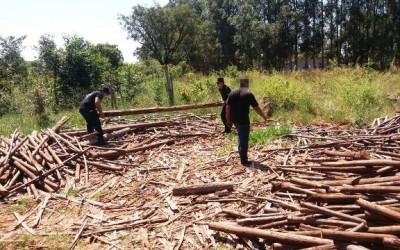 Suspeitos de furtarem madeiras são presos pela Patrulha Rural
