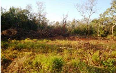 PMA autua dono de sítio por desmatamento ilegal de vegetação de cerrado