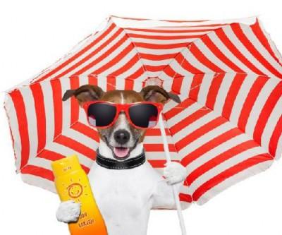 Cães no verão – Cuidado com o calor