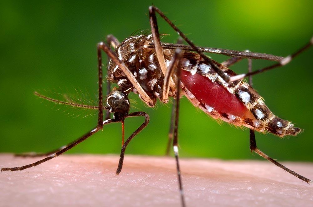 Aumenta para 1.817 o número acumulado de casos suspeitos de Dengue neste ano