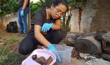 Presentes nos jardins, caramujos africanos podem trazer doenças graves; saiba como exterminá-los