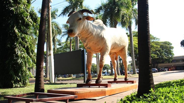 Evolução do gado nelore no Brasil passa por criadores de Araçatuba-SP