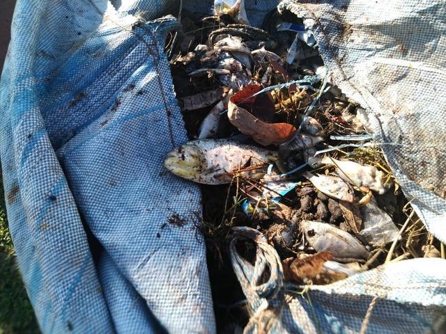 Peixes mortos são retirados da Lagoa Maior em Três Lagoas; a causa das mortes ainda é uma incógnita