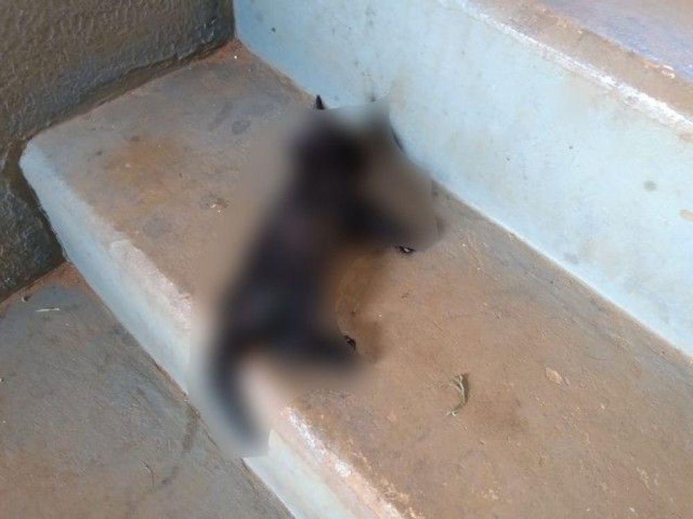 Mulher mata gato pisoteado em Três Lagoas e joga animal em escadaria