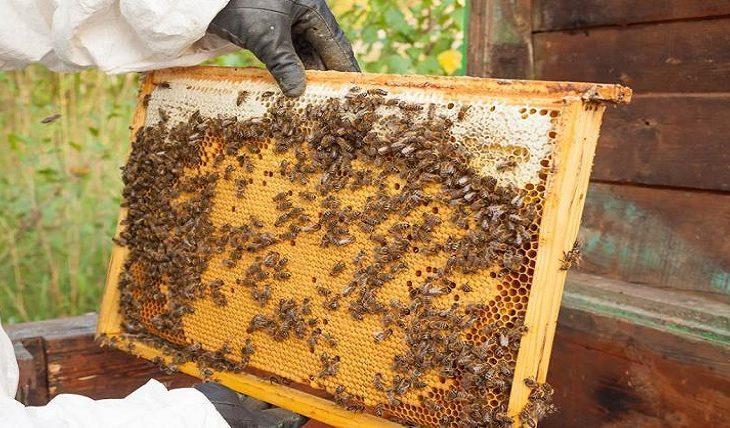Apicultura em MS deve se expandir com regulamentação de produtos de abelhas e derivados