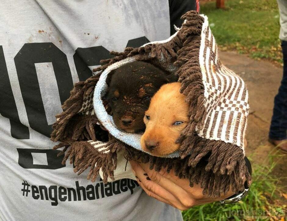 """Após """"pedido de socorro"""" de cadela, filhotes são resgatados de buraco"""